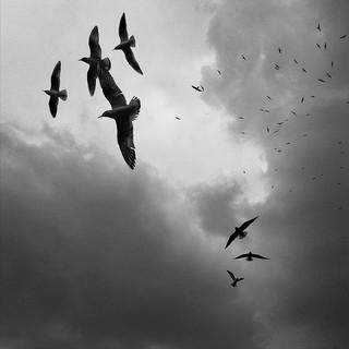 seagull community